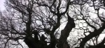 Looking up through the branches of a tree from the ground in a still from the film.
