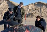O'Shea, Nolan, and the local coroner look over a recently deceased orca in a still from the film.