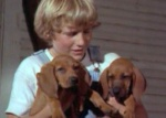 Billy holds the pups he has saved for years to buy in a still from the film.